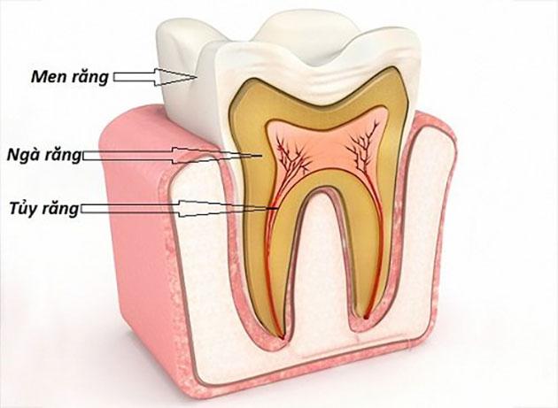 Người Trưởng Thành Có Bao Nhiêu Răng? - Nha Khoa Quốc Tế Á Châu - ảnh 4